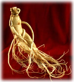 Ginseng – The Ultimate Super Tonic